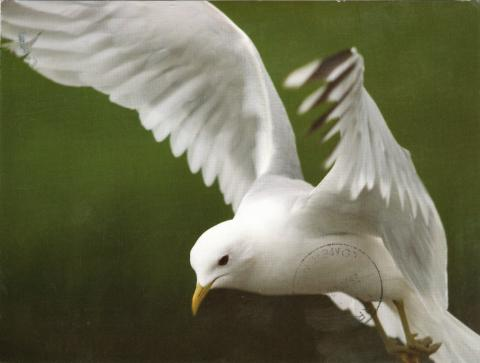 A white bird flying.
